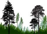 Fototapeta Las - evergreen trees silhouettes in forest on white © Alexander Potapov