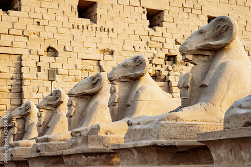 The Ram statues in front of Karnak Temple, Luxor, Egypt