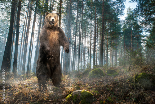 Brown grizzly bear standing on two legs in the forest.