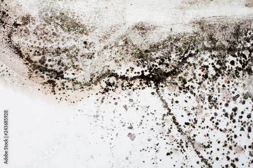 Black Mold On A White Wall In The House Buy Photos Ap Images