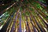 Fototapeta Sypialnia - Yellow bamboo cane © fotografiche.eu