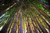 Fototapeta Fototapety do sypialni - Yellow bamboo cane © fotografiche.eu