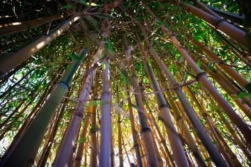 Yellow bamboo cane