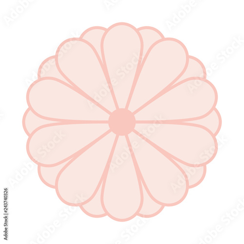 Japanese Kiku Chrysanthemum Flower Vector Symbol Or Emblem Vector