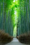 Fototapeta Bambus - 嵯峨野・竹林 © naka