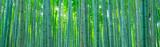 Fototapeta Bambus - 竹林 © naka