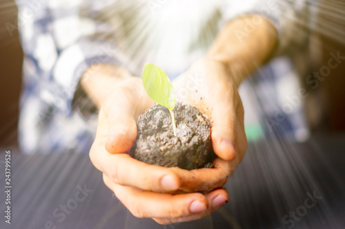 close up hands hold soil with small planted tree under sunrays f