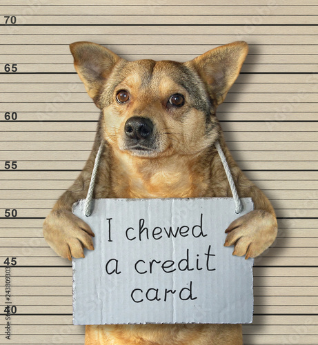 mata magnetyczna The bad dog chewed a credit card. He arrested by the police for this crime and sent to prison. Lineup background.