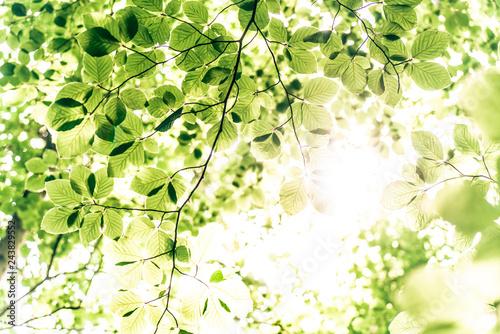 Lichtdurchflutete Baumkronen
