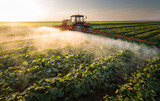 Farmer on a tractor with a sprayer makes fertilizer for young vegetable
