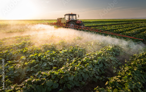 Farmer on a tractor with a sprayer makes fertilizer for young vegetable - 243850982