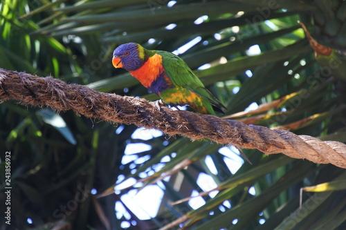 Regenbogen Papageien in einem Zoo in Südafrika