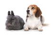 Leinwandbild Motiv Dog with rabbit isolated on white