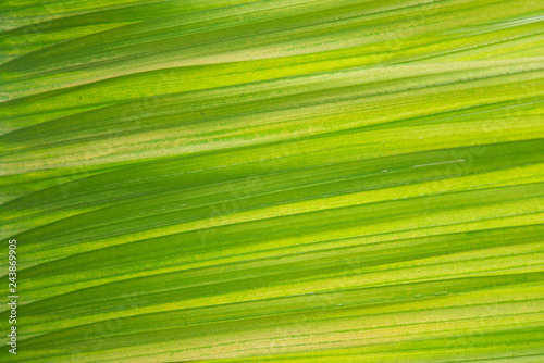 Abstract green palm leaf background