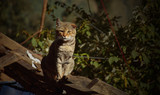Cat sitting on ruined wooden hut