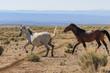 Wild Horses Running in the Desert