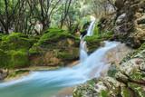 Waterfall torrent in mossy rocks environment. Majorca woods landscape in Serra de Tramuntana.