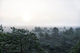 foggy dawn in the swamp - 243913944