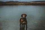 perro en medio de un lago - 243938785