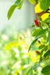 Leinwanddruck Bild - beautiful rose on nature park background