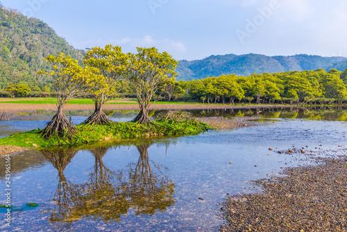 大浦川河口のマングローブ