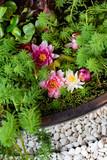 Lotus Flower.Background is the lotus leaf and lotus bud and lotus flower.