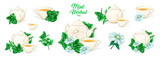 Herbal Tea with Mint in Ceramic Teapot and Tea cup. Clipart Vector Collection. Mint and Green Leaves. Isolated Detailed Herbs Illustration. Marker Hand Drawn Set. Porcelain Service for Restaurant Menu - 243999142