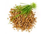 Weizen Keimlinge mit Weizengras - 244054128