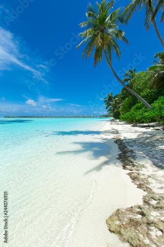 tropical Maldives island with white sandy beach and sea - 244076931