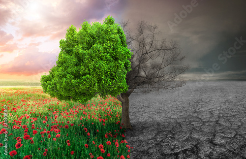 ecological concept with tree and climate changing landscape - 244081142
