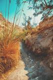 Fototapeta Bambus - Oasis in desert, Ein Gedi nature reserve. Israel © vvvita