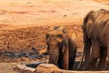 Fototapeta Sawanna - Funny baby elephant © Emilian
