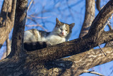 The cat climbed a tree