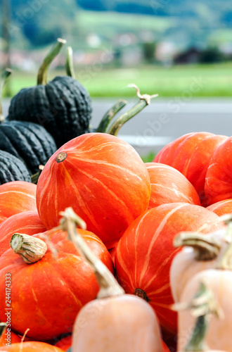 Pumpkins next to each other forming a background - 244174333