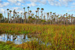 Scenic view at Orlando Wetlands Park, located near Orlando and Titusville, Florida