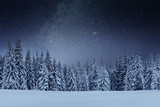 Dairy Star Trek in the winter woods. Dramatic and picturesque scene. In anticipation of the holiday. Carpathian Ukraine - 244195356