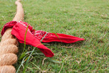 Rope With Bandana Lies On Grass Before Tug Of War - 244205162