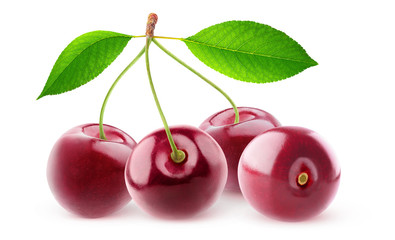 Isolated cherries. Four cherry fruits on a branch with leaves isolated on white background with clipping path © Anna Kucherova