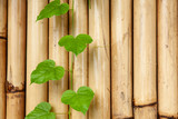 green branch on bamboo wall background