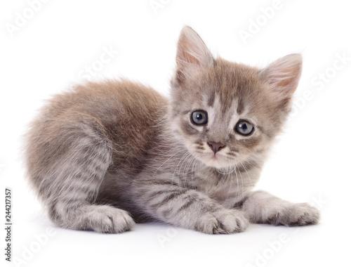 Leinwandbild Motiv Small gray kitten.