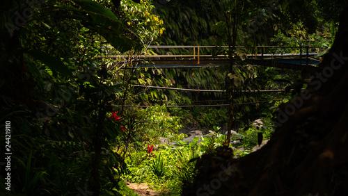 Wall mural old bridge in jungle rainforest. jungle landscape river in rainforest. rainforest with green, lush vegetation