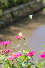 "Постер, картина, фотообои "" beautiful butterflies in the flower garden"""