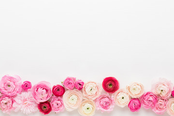 Beautiful colored ranunculus flowers on a white background.Spring greeting card.