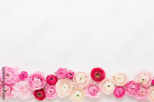 Beautiful colored ranunculus flowers on a white background.Spring greeting card. © gitusik