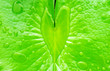 Leinwandbild Motiv Heart shape of fresh pure water on green lotus leaf top view, freshness environmental