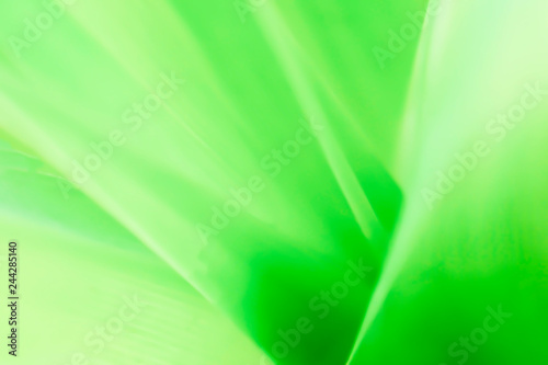 Closeup nature green for background/texture leaf blurred and greenery natural plants branch in garden at summer under sunlight concept design wallpaper view with copy space add text. - 244285140