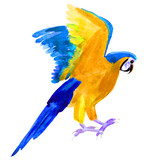 Macaw a parrot yellow blue araruna watercolor illustration