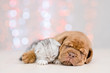 Leinwandbild Motiv Puppy hugging baby kitten. Christmas holidays background