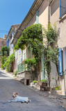 Stray Dow On Street In Provence