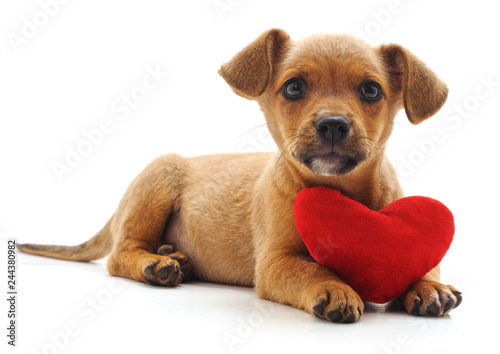 Puppy with heart. - 244380982